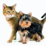 Hunde/ Katzen - Artikel